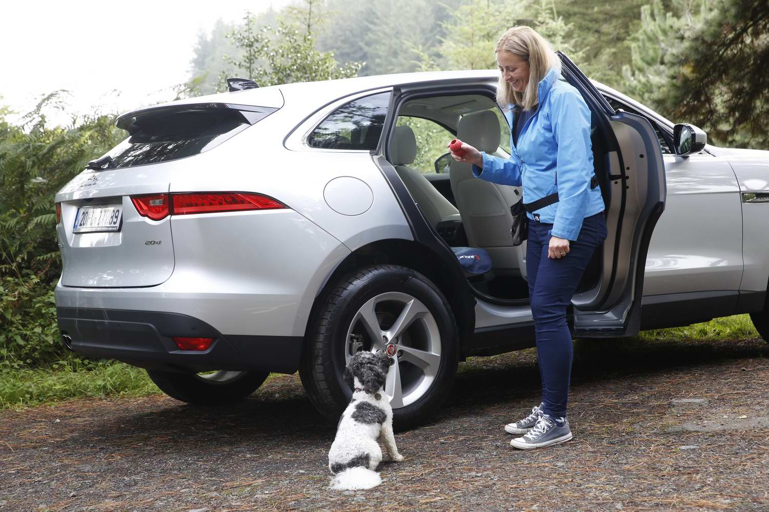 Car News | Doggy driving tips | CompleteCar.ie