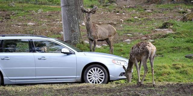 Car News | Watch out for animals this summer | CompleteCar.ie