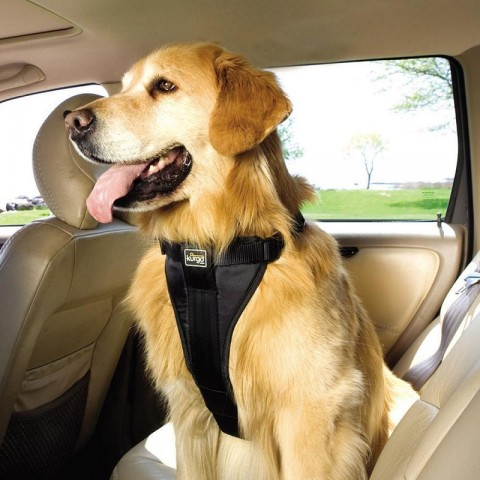Car News | Dogs to get harnesses by law? | CompleteCar.ie