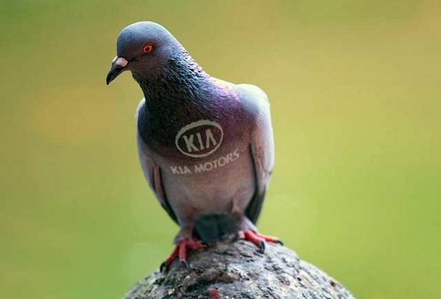 Car News | Kia tackles bird poo | CompleteCar.ie