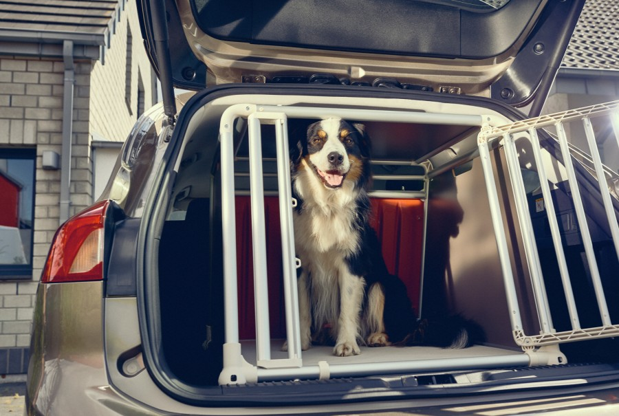 Car News | Dog owners admit to driving with unrestrained pets