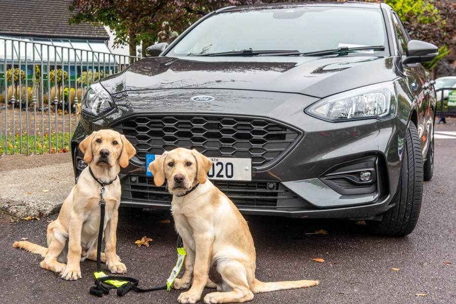 Car News | Win a Ford Focus and help Irish Guide Dogs | CompleteCar.ie